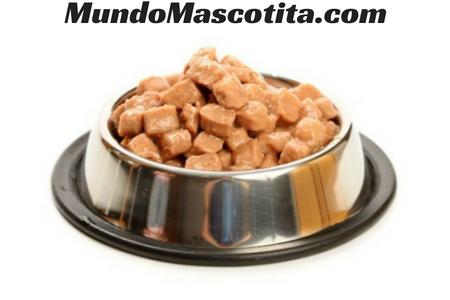 cual es la mejor marca de comida humeda para gatos