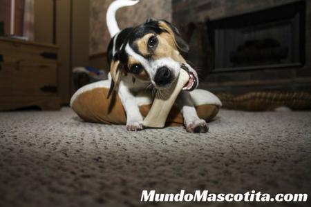 Como Educar a un Perro Para que no Muerda