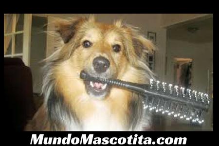 Como Evitar la Caída de Pelo de mi Perro