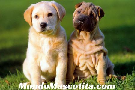 Cruza de Perros de Diferentes Razas