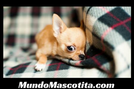 Mi Perro Vomita Espuma Blanca y Tiene Diarrea con Sangre