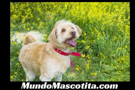 Omega 3 para Perros Dosis