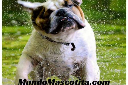 Síndrome de Cushing en Perros Alimentación