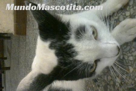 Síntomas de Envenenamiento en Gatos