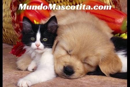 Adopción vs Compra de Mascotas