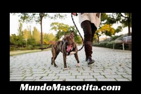 Consecuencias de Una Mordida de Perro