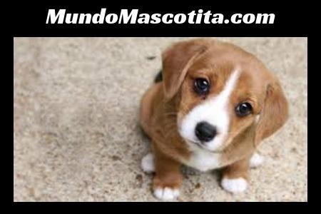 Cuantas Vacunas Necesita un Cachorro Para Salir a la Calle
