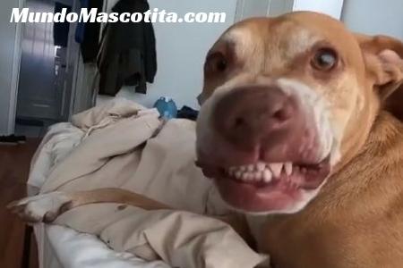 Porque mi Perro Estornuda Mucho y Seguido