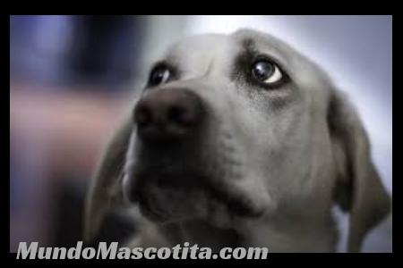 Que Hacen los Perros Cuando van a Morir