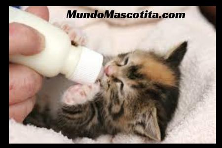 Todo Sobre Gatos Bebes