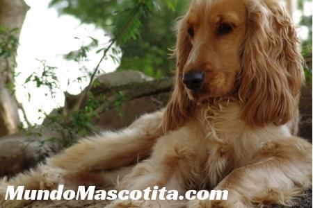Hemorroides en Perros Causas