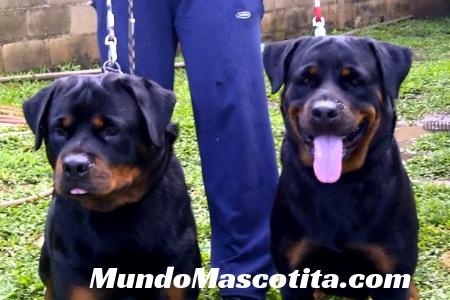 Agresividad Entre Perros que Viven Juntos