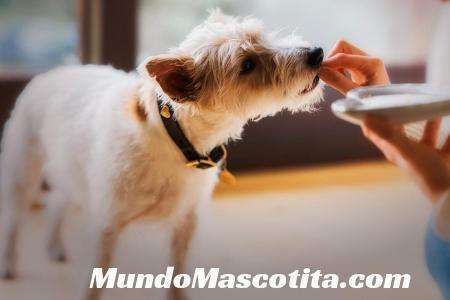 Alimentos Caseros Para Perros con Anemia