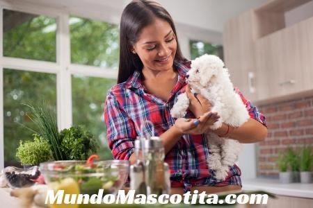 Alimentos Caseros para Perros con Insuficiencia Renal