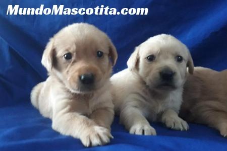 Edad para Vacunar Cachorros y Desparasitar