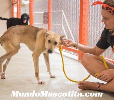 Fibrosarcoma en Perros Síntomas
