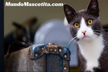 Información Sobre los Gatos Domésticos