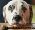 Linfosarcoma en Perros Síntomas y Tratamientos