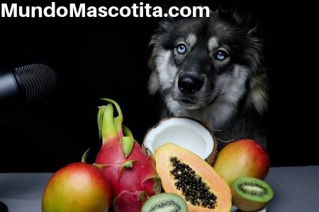 Los Perros Pueden Comer Durazno