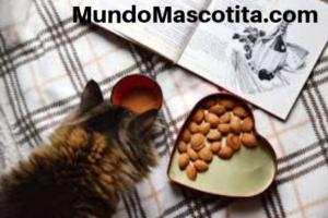 Los gatos Pueden Comer Chocolate